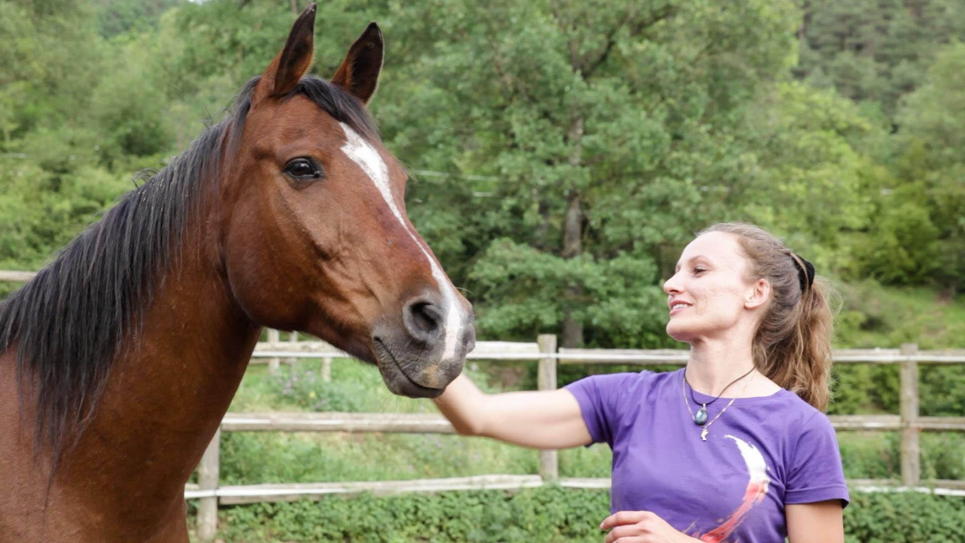 Taller Contact-impro con caballos 4